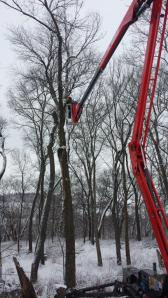 Tree Care, Tree Trimming and Tree Pruning